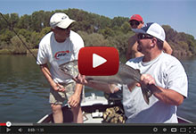 Sacramento River Fishing Salmon Striper Guide Service Videos